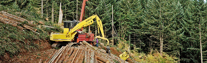 Logging and Selling Timber | Know Your Forest